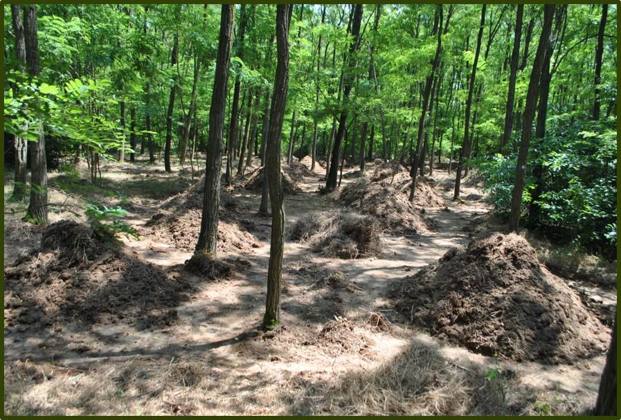 Kupacokba rendezett talaj